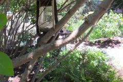 After Garden Oasis Hidden Treasures within the Trees